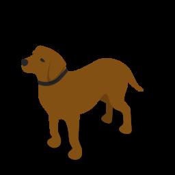 if_dog-01_2140043